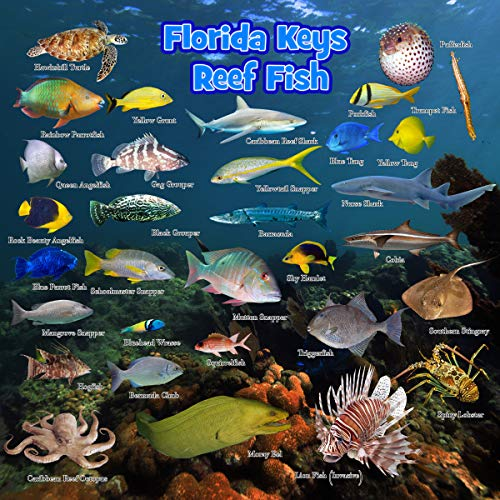 Bimini Lures Florida Keys Reef Creatures ID Card. 8