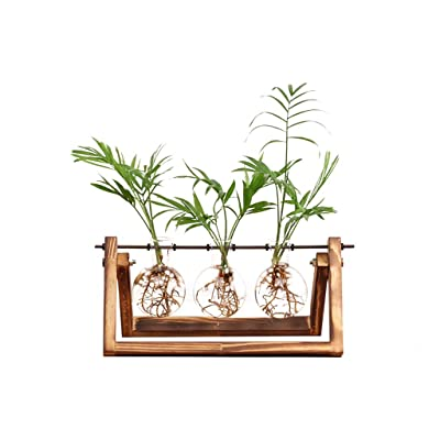 Ivolador Desktop Glass Planter Bulb Vase with Retro Solid Wooden Stand and Metal Swivel Holder for Hydroponics Plants Home Garden Wedding Decor (3 Bulb Vase) : Garden & Outdoor
