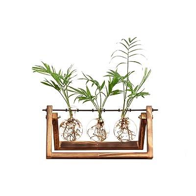 Ivolador Desktop Glass Planter Bulb Vase with Retro Solid Wooden Stand and Metal Swivel Holder for Hydroponics Plants Home Garden Wedding Decor (3 Bulb Vase) : Garden & Outdoor