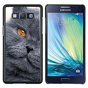 Gato Scottish Fold Chartreux británica- Metal de aluminio y de plástico duro Caja del teléfono - Negro - Samsung Galaxy A5 / SM-A500