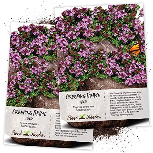 Seed Needs, Wild Creeping Thyme (Thymus serpyllum) Twin Pack of 5,000 Seeds Each (Best Buys Direct Grass Seed)