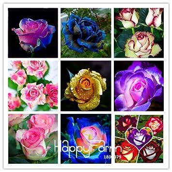 100 Stücke Bunte Rose Blumensamen Hausgarten Pflanzen Seltene Blumensamen Neu