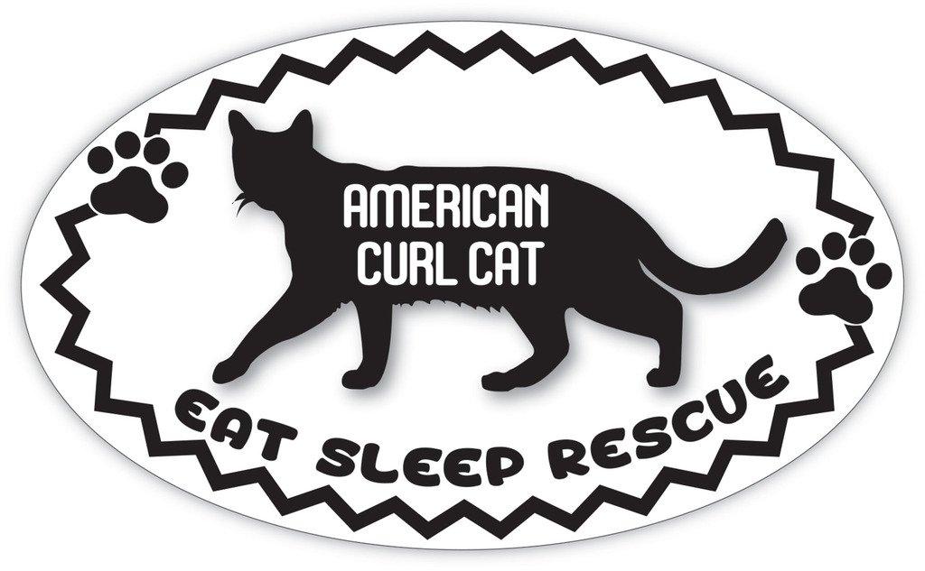 American Curl Cat Rescue