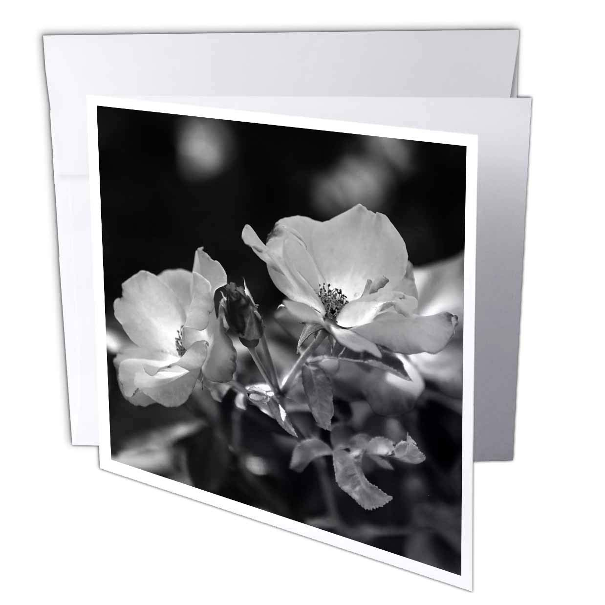 Amazon com 3drose stamp city flowers black and white photograph of a cluster of playboy floribunda roses 12 greeting cards with envelopes