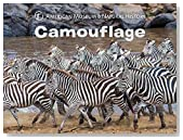 Camouflage (Science for Toddlers)