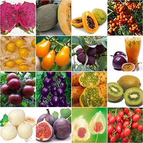 Portal Cool Purple Pearl Cherry Tomato 20: Varity Rare Seeds Heirloom Passion Fruit Sweet Melon Cherry Purple Tomato Pitaya