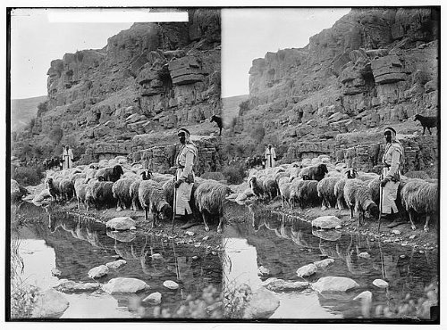Costume Ideas Starting With L (Photo: Costumes,characters,etc. 'Sheep beside still waters')