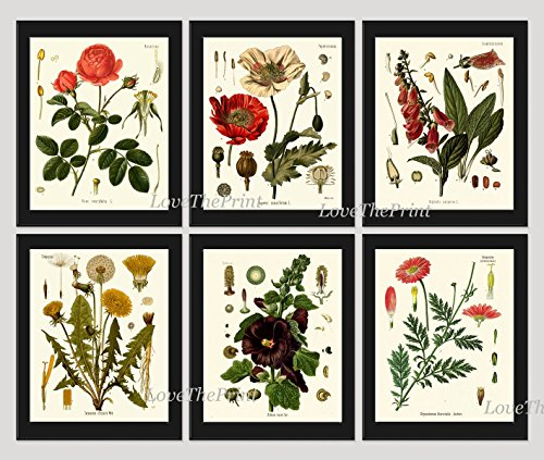 Botanical Beautiful Hollyhock Dandelion Unframed product image