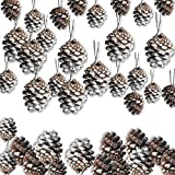 "BANBERRY DESIGNS Pine Cone Ornaments - Set of 36-1 1/2"" White-Tipped Painted Christmas Pinecone Ornaments with String"