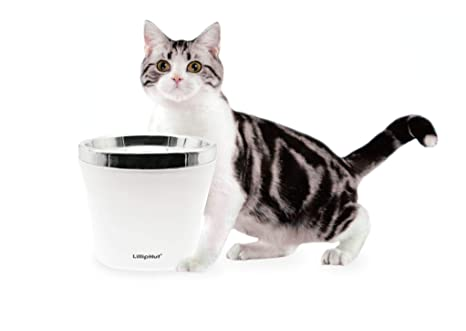 Zedelmaier - Fuente de Agua para Gatos y Perros con Filtro de ...
