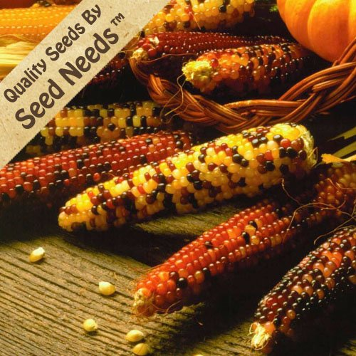 Indian Corn - 9