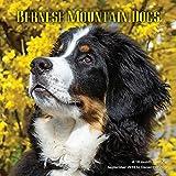Bernese Mountain Dog Calendar - 2017 Wall Calendars - Calendar 2016 - Dog Breed Calendars - Bernese Calendar - Monthly Wall Calendar by Magnum