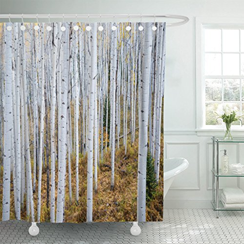 Green Aspen Trees - Emvency Waterproof Shower Curtain Curtains Colorful Abstract Grove of Aspen Trees in the Rocky Mountains Colorado Green Autumn 66