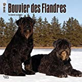 Bouvier des Flandres 2018 12 x 12 Inch Monthly Square Wall Calendar, Animals Dog Breeds