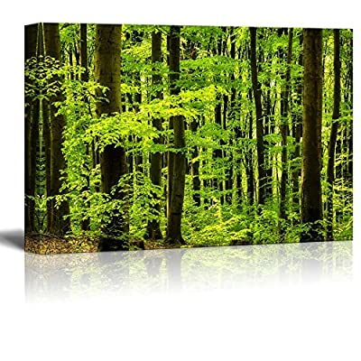 Canvas Prints Wall Art - Beautiful Beech Forest.Scenery of Trees/Woods | Modern Wall Decor/Home Art Stretched Gallery Canvas Wraps Giclee Print & Ready to Hang - 12