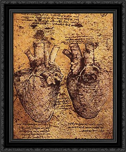 Amazon Drawing Of The Heart And Its Blood Vessels From The