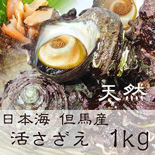 但馬海産市場 活サザエ 1kg(8個~12個) 山陰日本海 但馬産 産地直送 きれいな海で育った サザエ サイズ(中程度100g前後/個)
