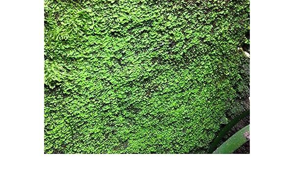 3 litros Ben s Rainforest Background modellier turba Crear y begrünung la terrarios Posterior: Amazon.es: Productos para mascotas