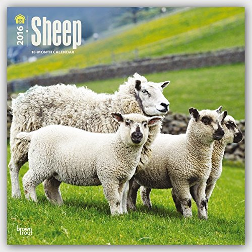 Sheep 2016 - Schafe - 18-Monatskalender: Original BrownTrout-Kalender [Mehrsprachig] [Kalender] (Wall-Kalender)