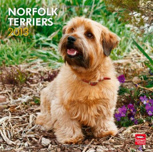 Norfolk Terriers 2013 Square 12X12 Wall Calendar