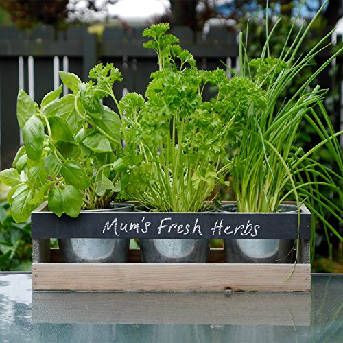 Kitchen Window Herb Planter: Viridescent Indoor Herb Garden Kit