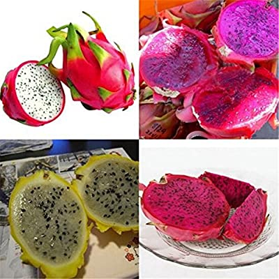 GuanGsskuo 100Pcs Garden Seeds Mixed Color Pitaya Seeds Delicious Fruit Bonsai Plant Home Garden Decor for Home Garden Courtyard Pitaya Seeds : Garden & Outdoor