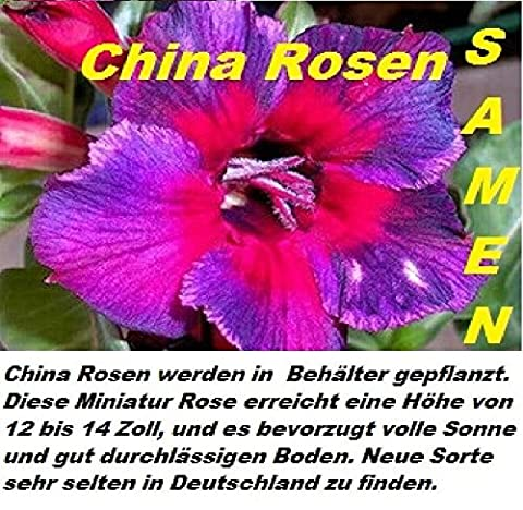 20x China Rosen Samen Blumensamen Blume Pflanze Rose Garten Rarität Neuheit sehr selten Sorte (Rose Garden Di Bambù)