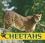 Cheetahs, Henry Randall, 1448826217