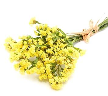 Yellow statice seeds limonium sinuatum amazon garden yellow statice seeds limonium sinuatum mightylinksfo