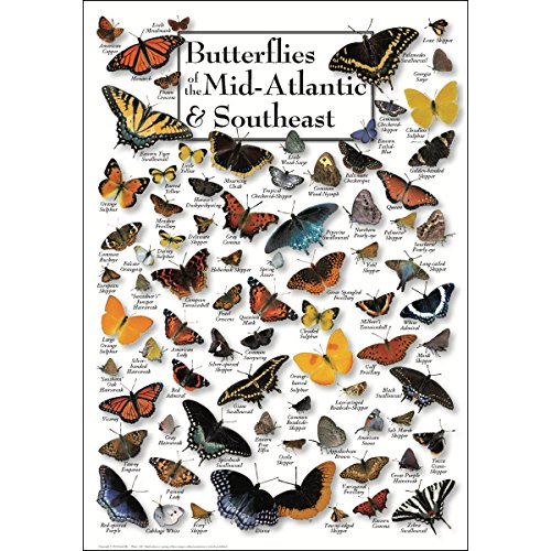 Earth Sky & Water Poster - Butterflies of the Mid-Atlantic & Southeast -
