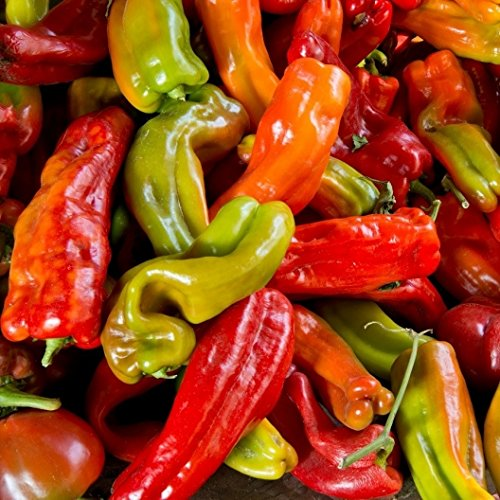 David's Garden Seeds Pepper Chili Anaheim Chile SL112AB (Green) 50 Organic Heirloom (Juanitas Chile)
