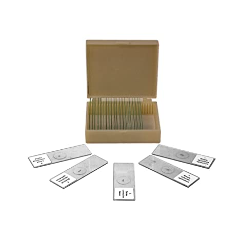 Amazon.com: 25 Prepared Microscope Slides Human Biology Specimen Set ...