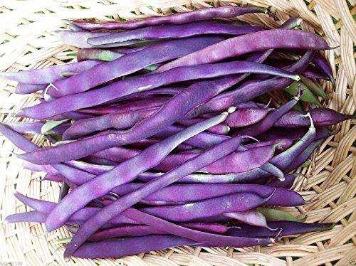 100 Organic Bean,Purple Pod Pole (Phaseolus vulgaris) stringless,Snap,Heirloom !