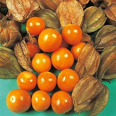 Oriental Fruit - Cape Gooseberry - 35 Seeds