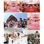 Ewandastore-1000-Pcs-Fabric-Silk-Artificial-Flower-Rose-Petals-Wedding-Favor-Bridal-Party-Vase-Decoration-Table-ConfettiPinkHot-PinkWhite