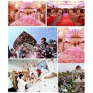 Ewandastore 1000 Pcs Fabric Silk Artificial Flower Rose Petals Wedding Favor Bridal Party Vase Decoration Table Confetti(Champagne) 5