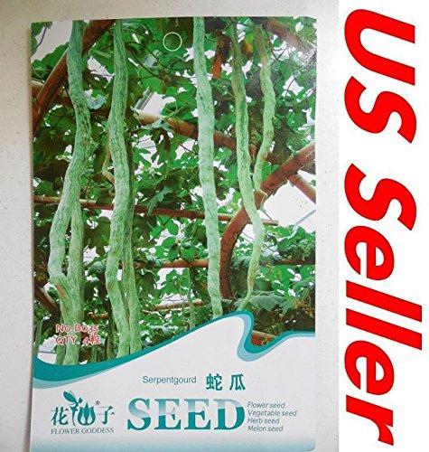 4 Seeds Serpentgourd Seeds E122, Heirloom Snake Gourd Vegetable Seeds DIY Garden