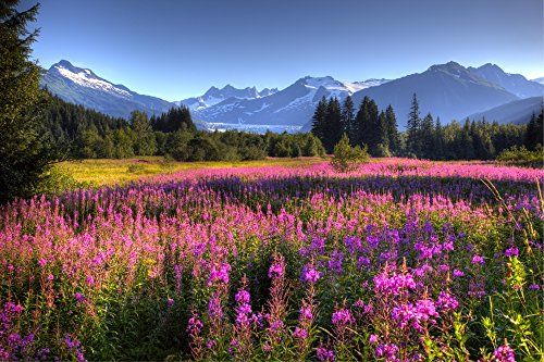 - Posterazzi Scenic View Of The Mendenhall Glacier With A Field Of Fireweed In The Foreground Southeast Alaska Hdr Image Poster Print (34 x 22)