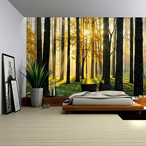 Wall26 A Peaking View Through The Forest Of The Morning Sunrise   Wall Mural,  Removable Sticker, Home Decor   100x144 Inches