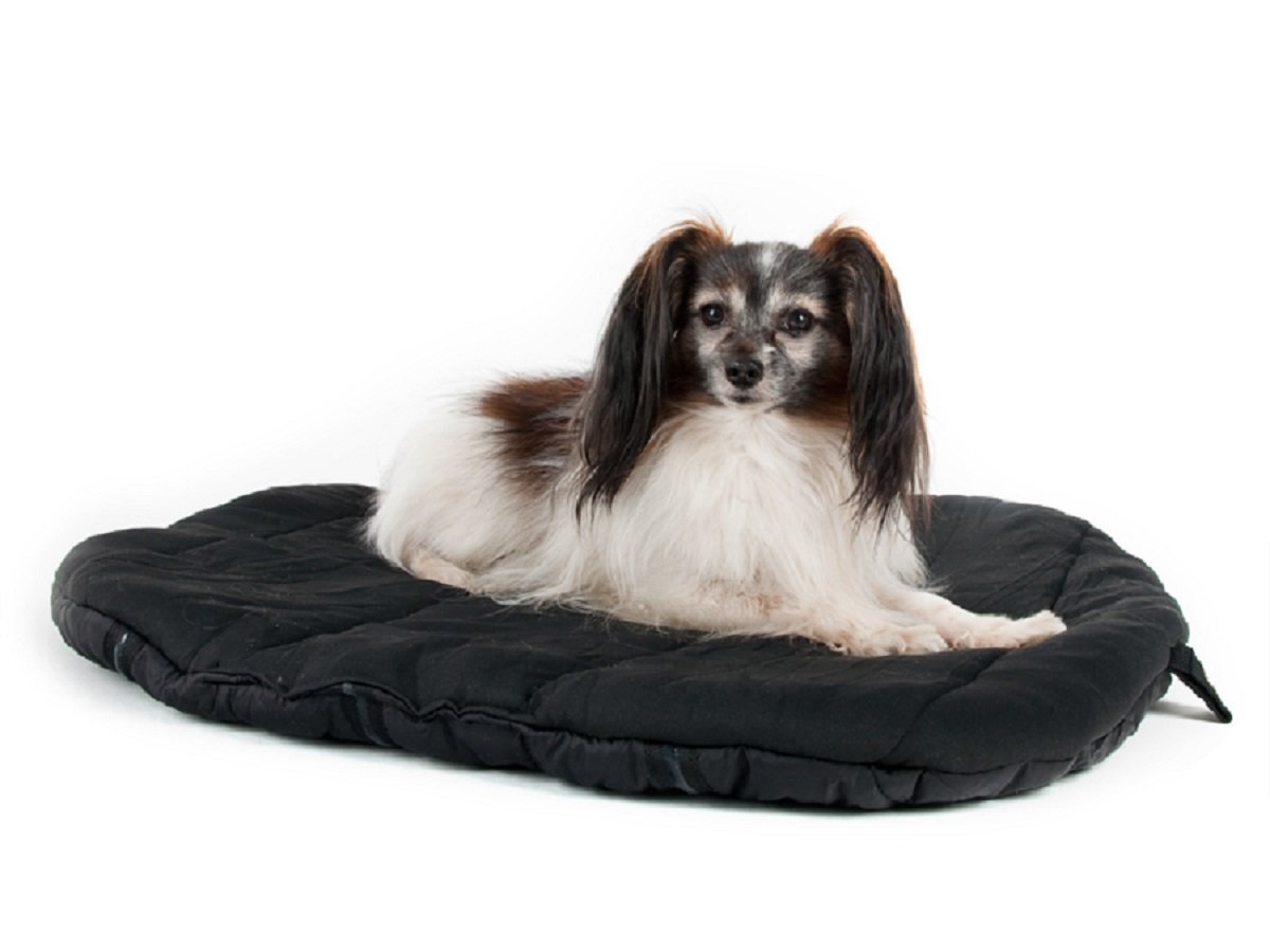 Back On Track Dog Travel Beds (55X60cm) 21 1 2 X 23 1 2 Black