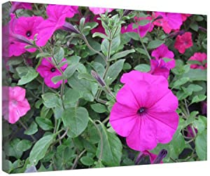 """iRocket Canvas Prints Wall Art - Flowers Day At The Greenhouse 17 - Wood Board Background Stretched Canvas Wrap Ready To Hang For Home And Office Decoration - 20"""" X 14"""""""