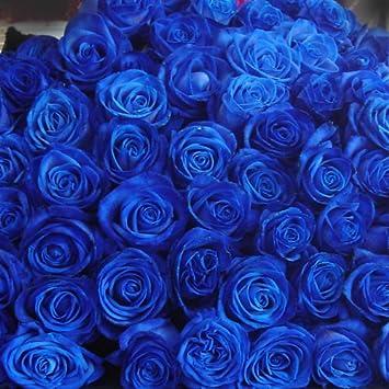 Amazon 青いバラ ブルーローズ ...
