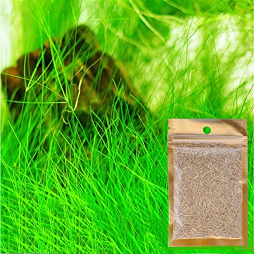 Patgoal Aquarium Grass Seeds Water Aquatic Plant Seeds Family Easy Plant Seeds For Decorate The Aquarium
