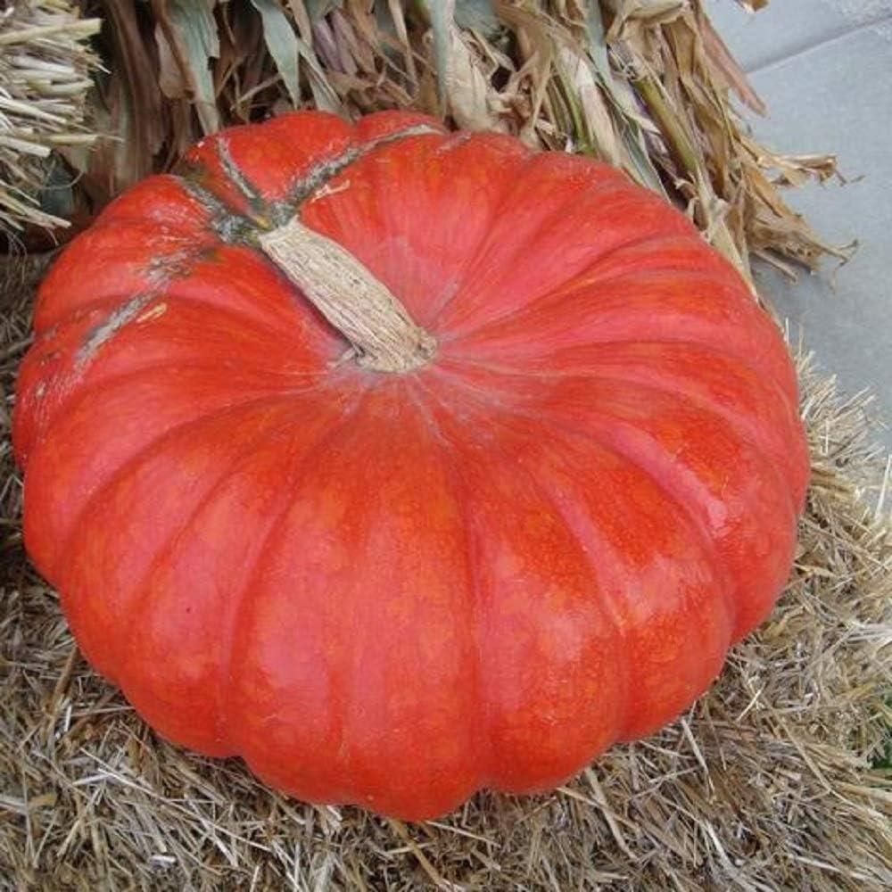 David's Garden Seeds Pumpkin Cinderella 9389 (Orange) 25 Non-GMO, Heirloom Seeds