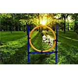 Namsan Dog Outdoor Games,Pet Training Jump Hoop, Dog Agility Starter Equipment by Namsan