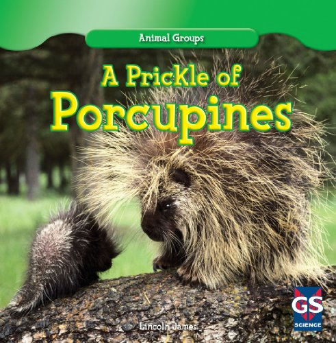 A Prickle Of Porcupines  Animal Groups
