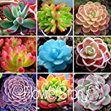 200 Rare Mix Lithops Seeds Living Stones Succulent Cactus Organic Garden Bulk Seed,#QIJ31J