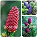 New Arrival!!! Imported Fir Seeds Abies Tree Seeds Easy to Grow Foliage Plants for Garden Bonsai Trees Cold-resistance 15 PCS