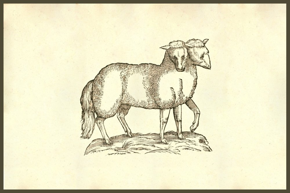 Lambs Book Of Art I One Year Of Drawing