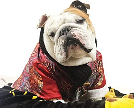 Khemn Bulldog Custom Clothing Bulldog Red Cheongsam mit